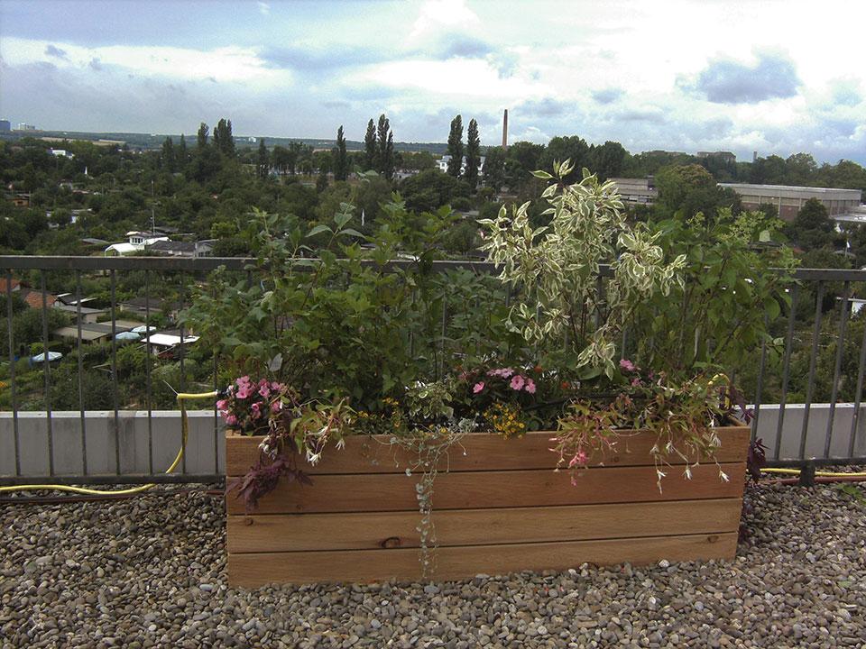 Balkonpflanzen und Büropflanzen