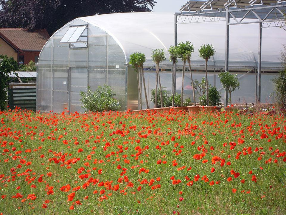 Kübelpflanzen, Pflanzen und Blumen überwintern