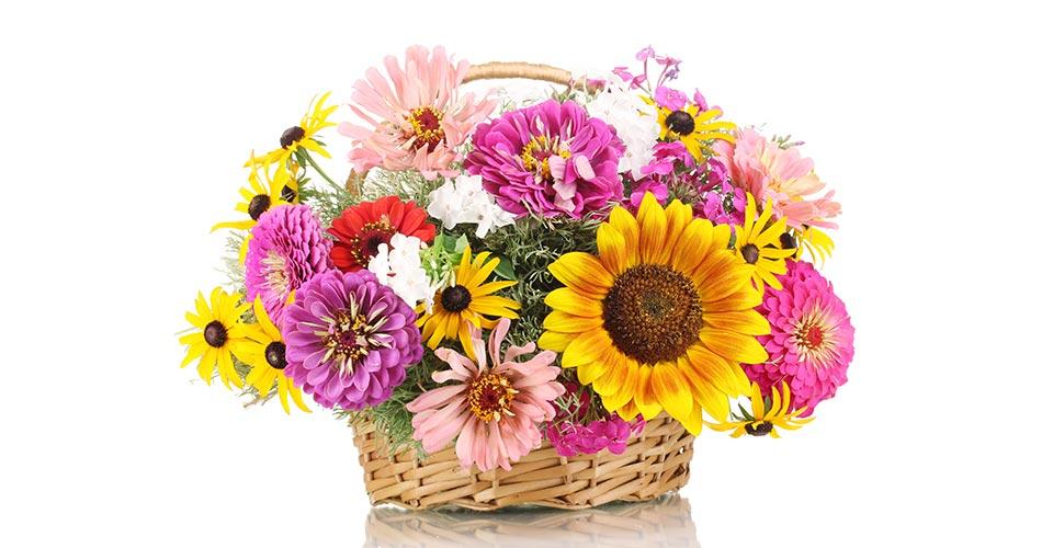 Kübelblumen und Blumensträuße und Blumenkörbe