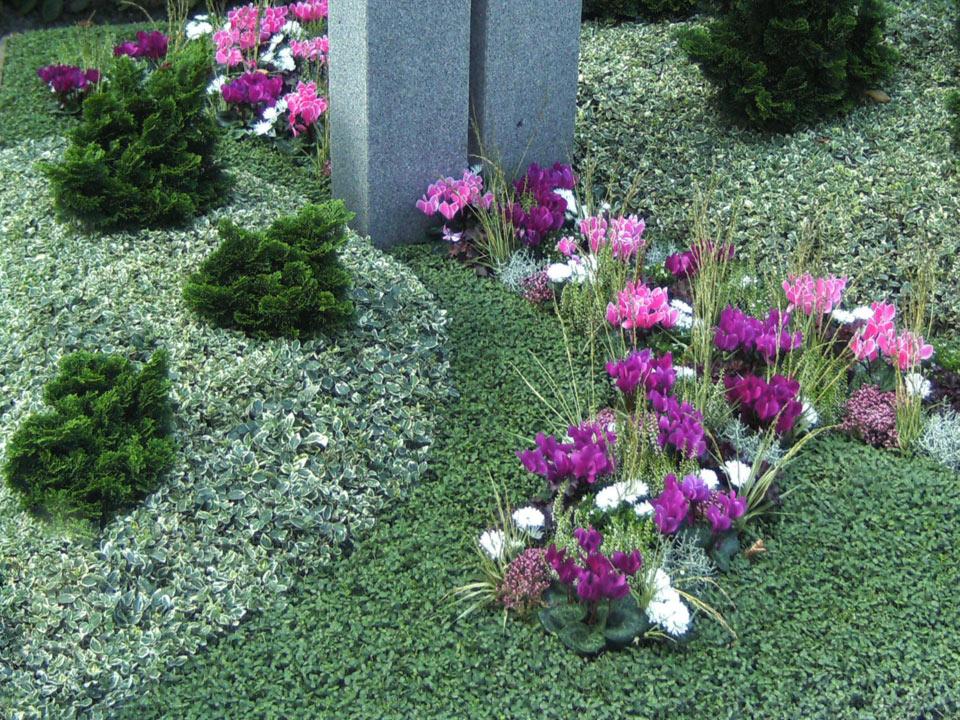 grabbepflanzung-grabpflege-(14)