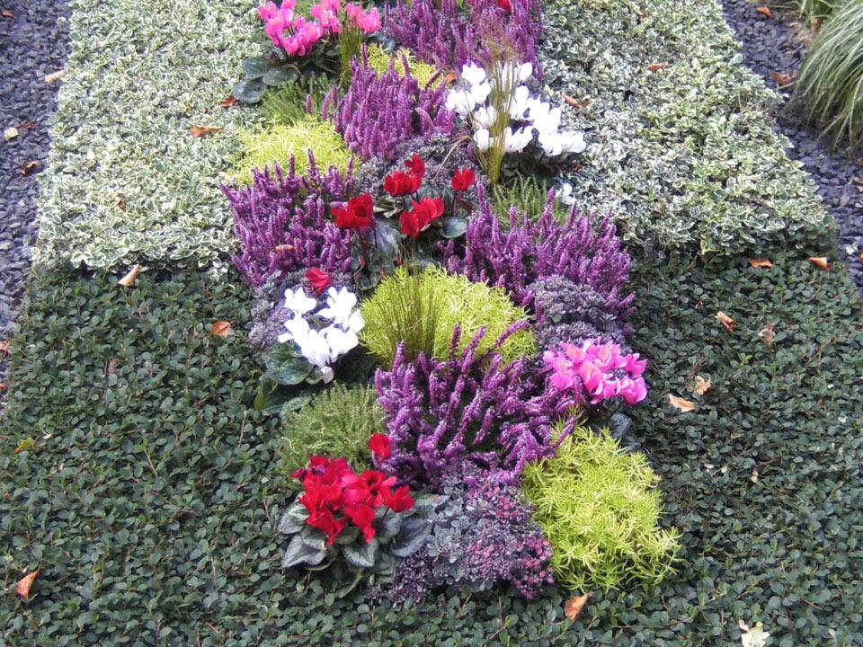 grabbepflanzung-grabpflege-(4)